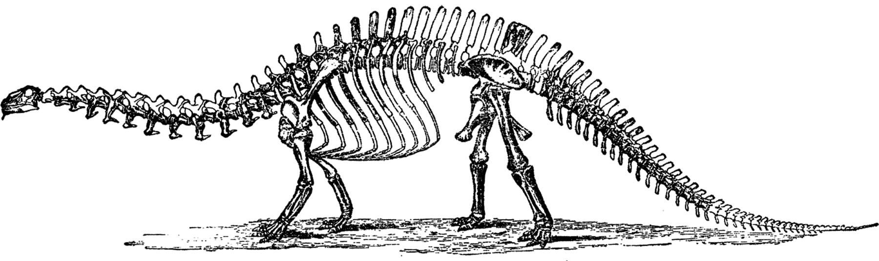 picture triceratops public domain dinosaur bones image stegosaurus vintage triceratops picture
