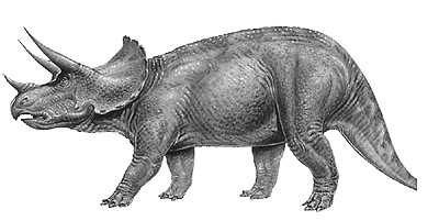 picture triceratops triceratops description size fossil diet facts picture triceratops