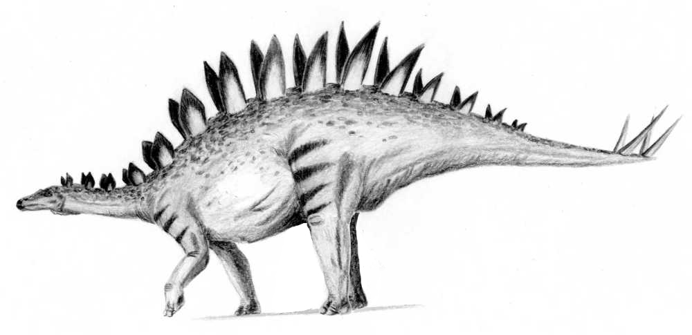 pictures of a stegosaurus art evolved life39s time capsule january 2013 of pictures stegosaurus a