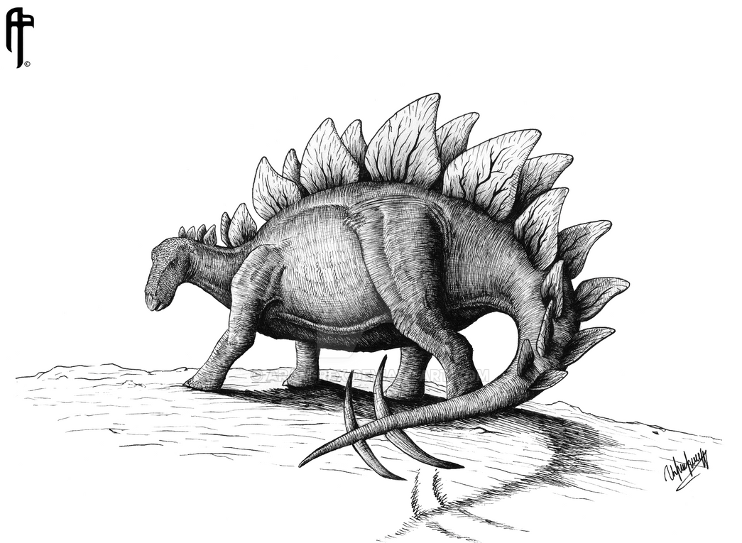 pictures of a stegosaurus how to draw a stegosaurus youtube a of stegosaurus pictures