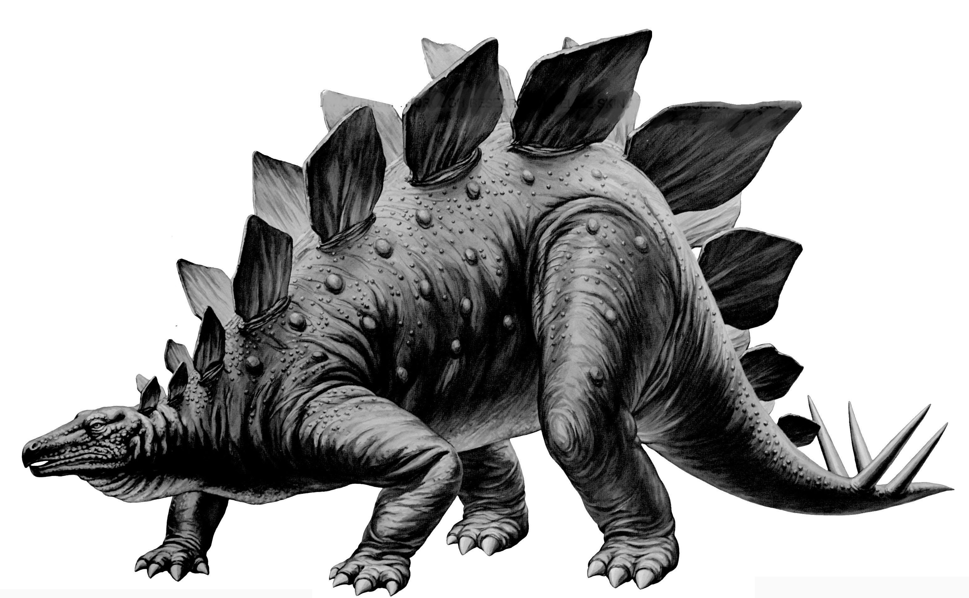 pictures of a stegosaurus nofineline stegosaurus stenops tamiya 135 of a stegosaurus pictures