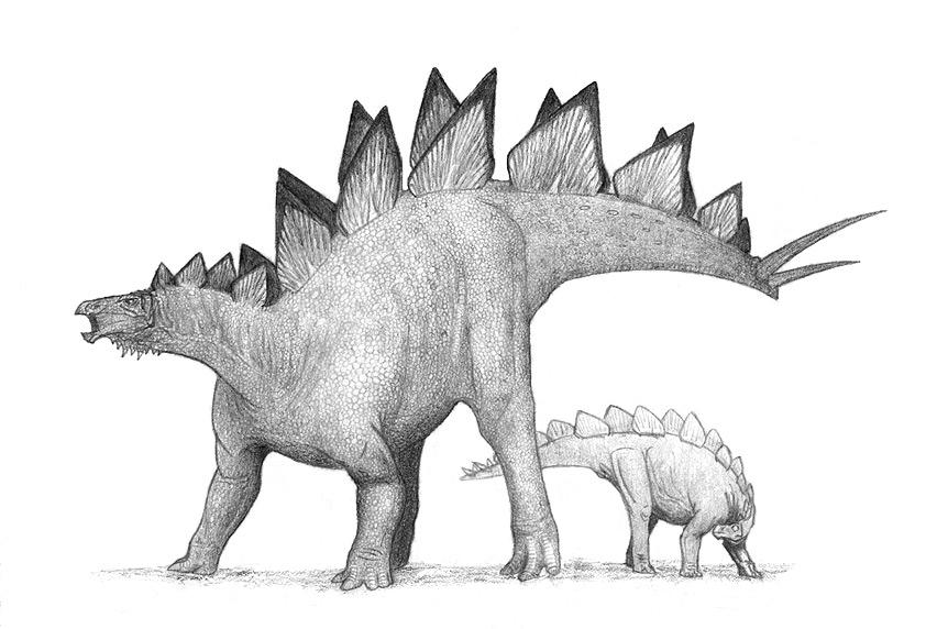 pictures of a stegosaurus pdf species of plated dinosaur stegosaurus morrison stegosaurus pictures of a
