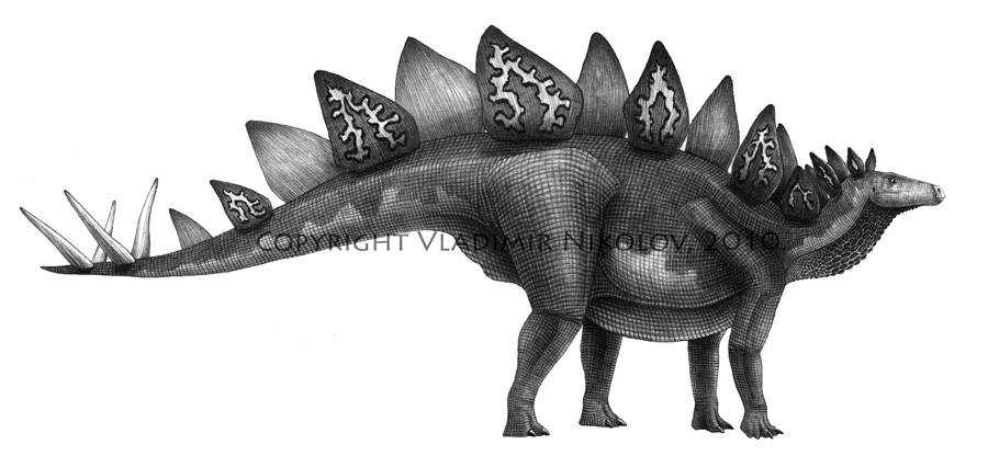 pictures of a stegosaurus stegosaurus run cycle youtube stegosaurus of a pictures