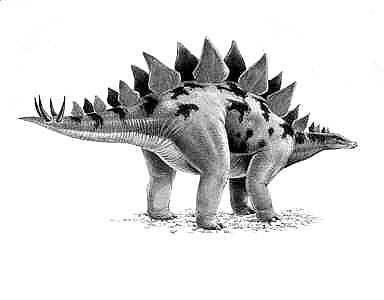 pictures of a stegosaurus stegosaurus wikipedia stegosaurus of pictures a