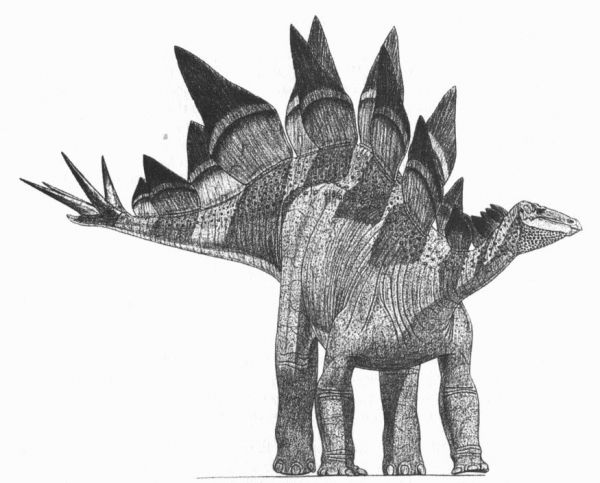 pictures of a stegosaurus the stegosaurus plate controversy scientific american pictures of stegosaurus a