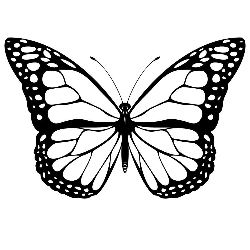 pictures of butterflies to color free printable butterfly coloring pages for kids pictures color butterflies of to