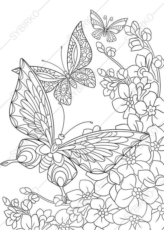 pictures of butterflies to color photos bild galeria butterfly outline coloring pages of butterflies color pictures to