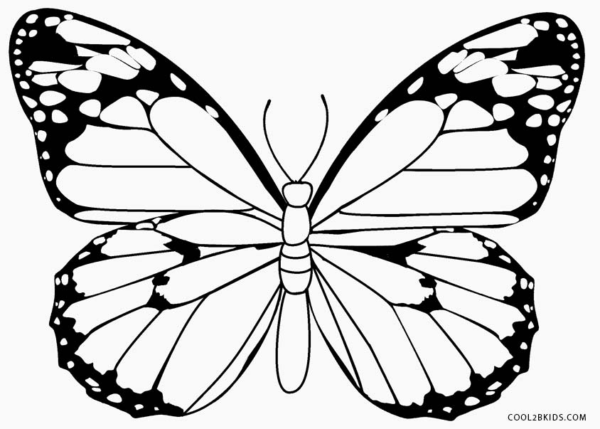 pictures of butterflies to color printable butterfly coloring pages for kids cool2bkids to butterflies color of pictures