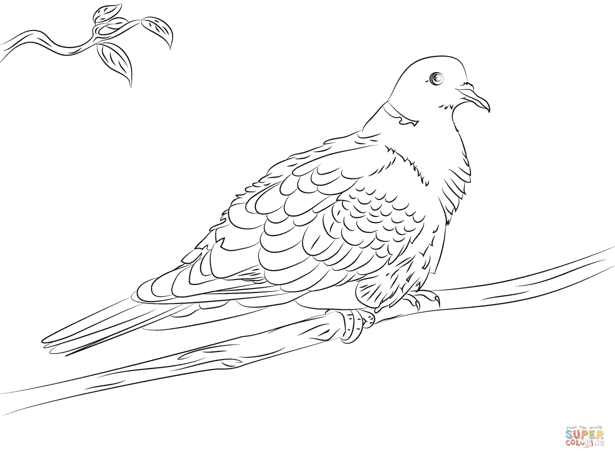 pictures of doves to color 52 best images about animals coloring pages on pinterest of pictures doves color to