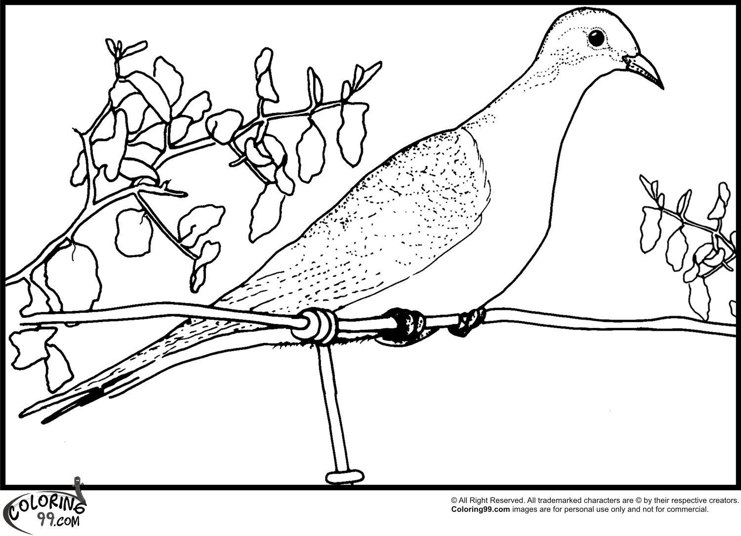 pictures of doves to color dove coloring pages team colors to doves pictures of color