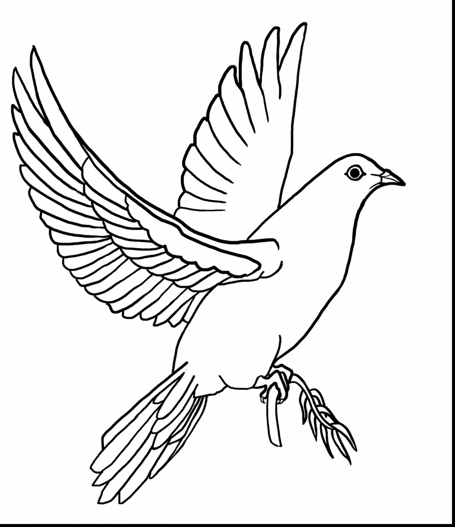 pictures of doves to color peace dove coloring page at getcoloringscom free color doves pictures of to