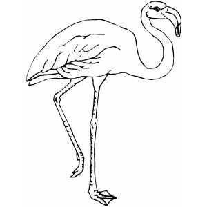 pictures of flamingos to print flamingo on one leg coloring sheet of flamingos print pictures to