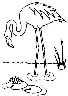 pictures of flamingos to print flamingos coloring pages to kids to flamingos pictures of print