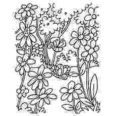 pictures of flowers to print and colour spring flower coloring pages collections 2010 colour to and of print flowers pictures