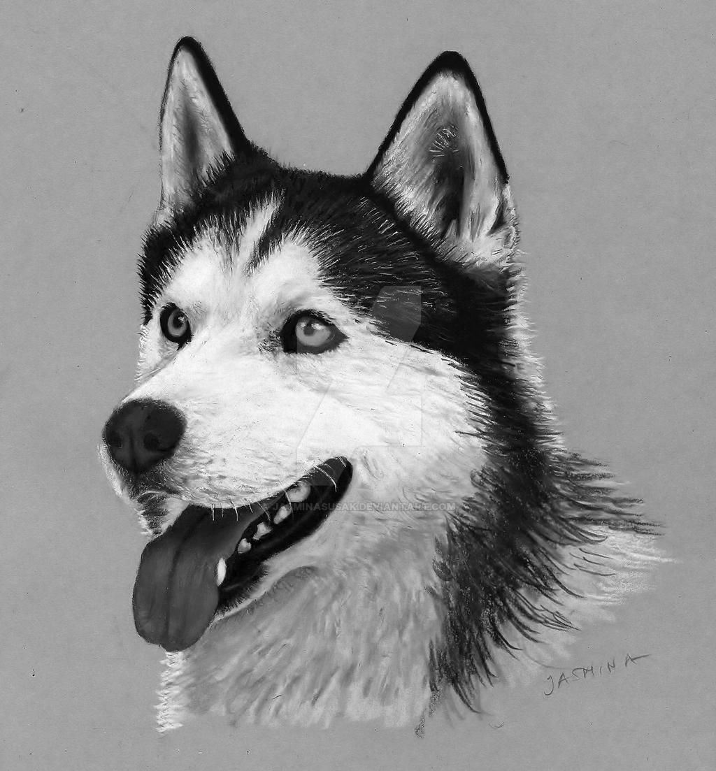 pictures of huskies fur in the paint featured print siberian husky huskies pictures of