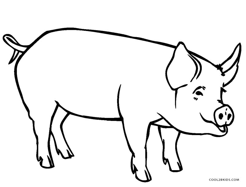 pig to colour free printable pig coloring pages for kids cool2bkids colour pig to