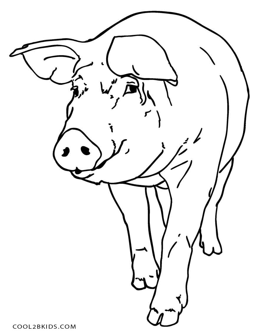 pig to colour pig coloring page super simple to colour pig