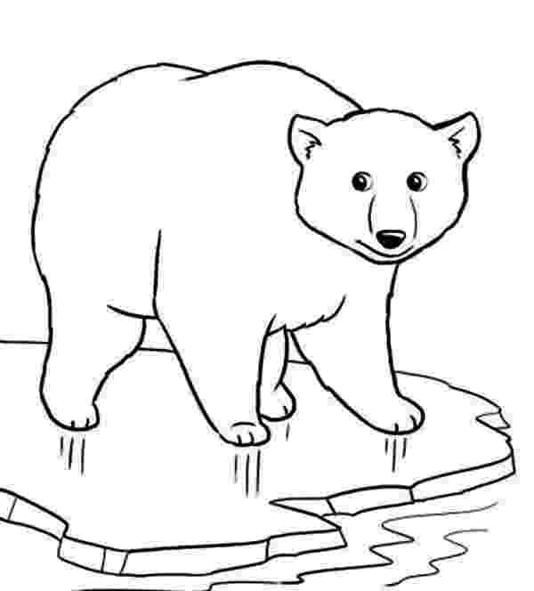 polar bear printables belajar mewarnai gambar binatang untuk anak beruang yang printables polar bear