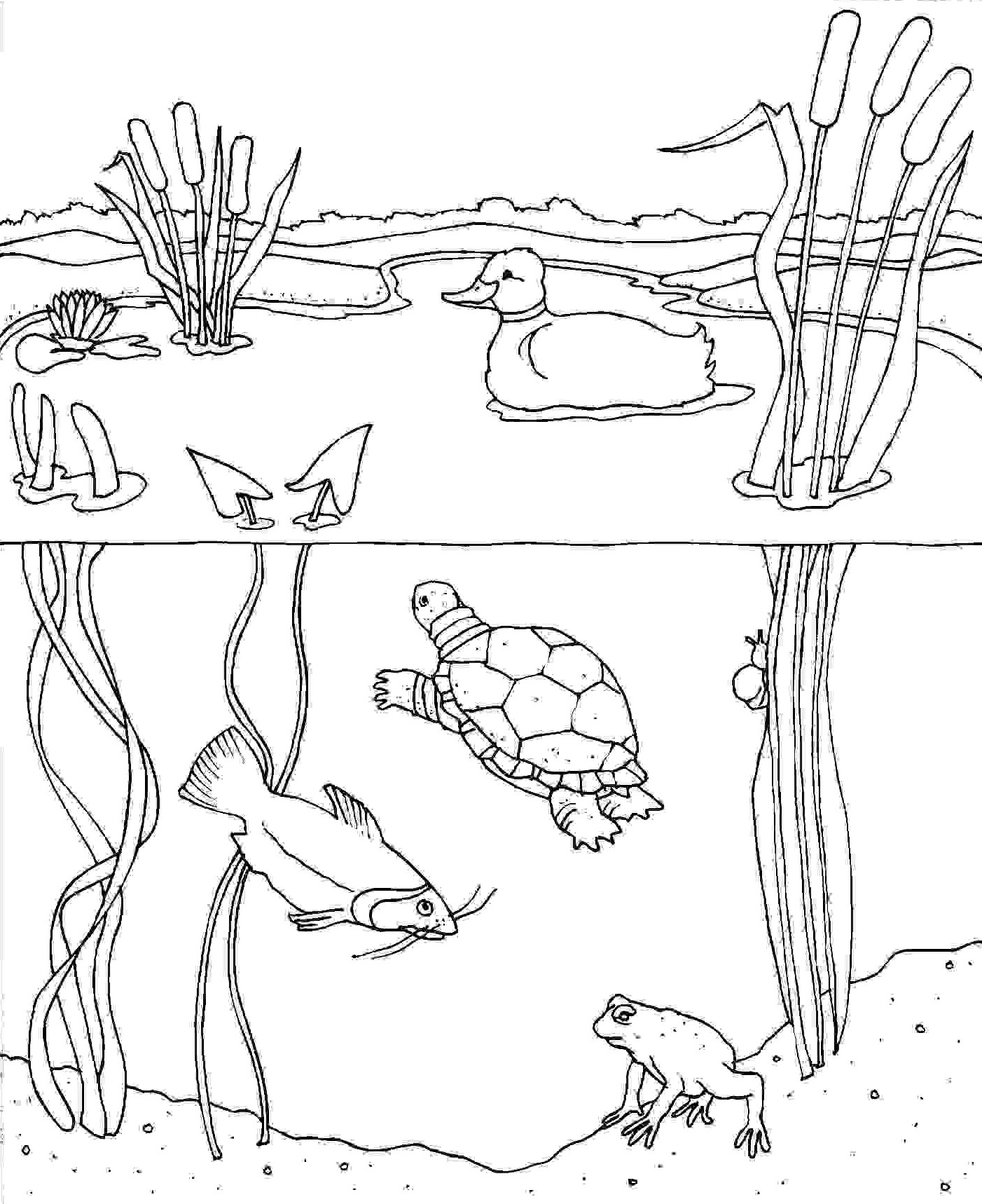 pond coloring pages august 16 its water quality month pages pond coloring