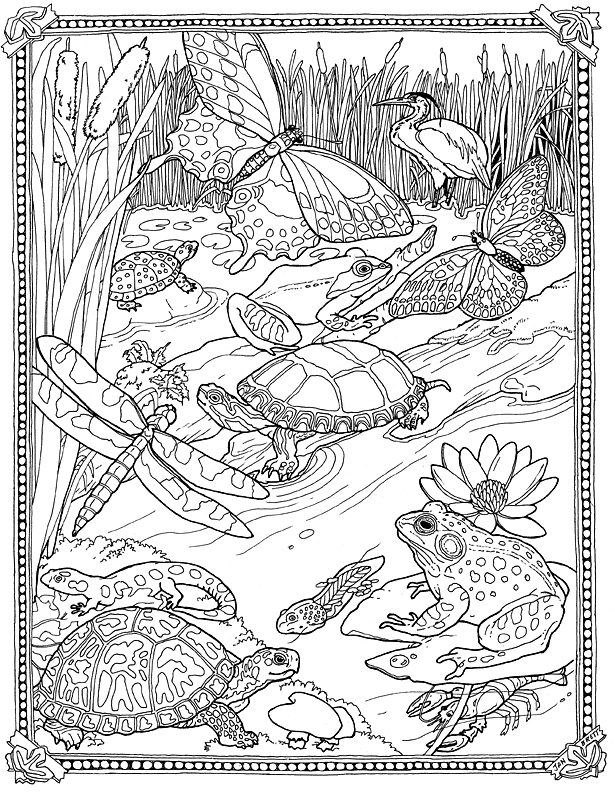 pond coloring pages lilypad pond coloring pages pond