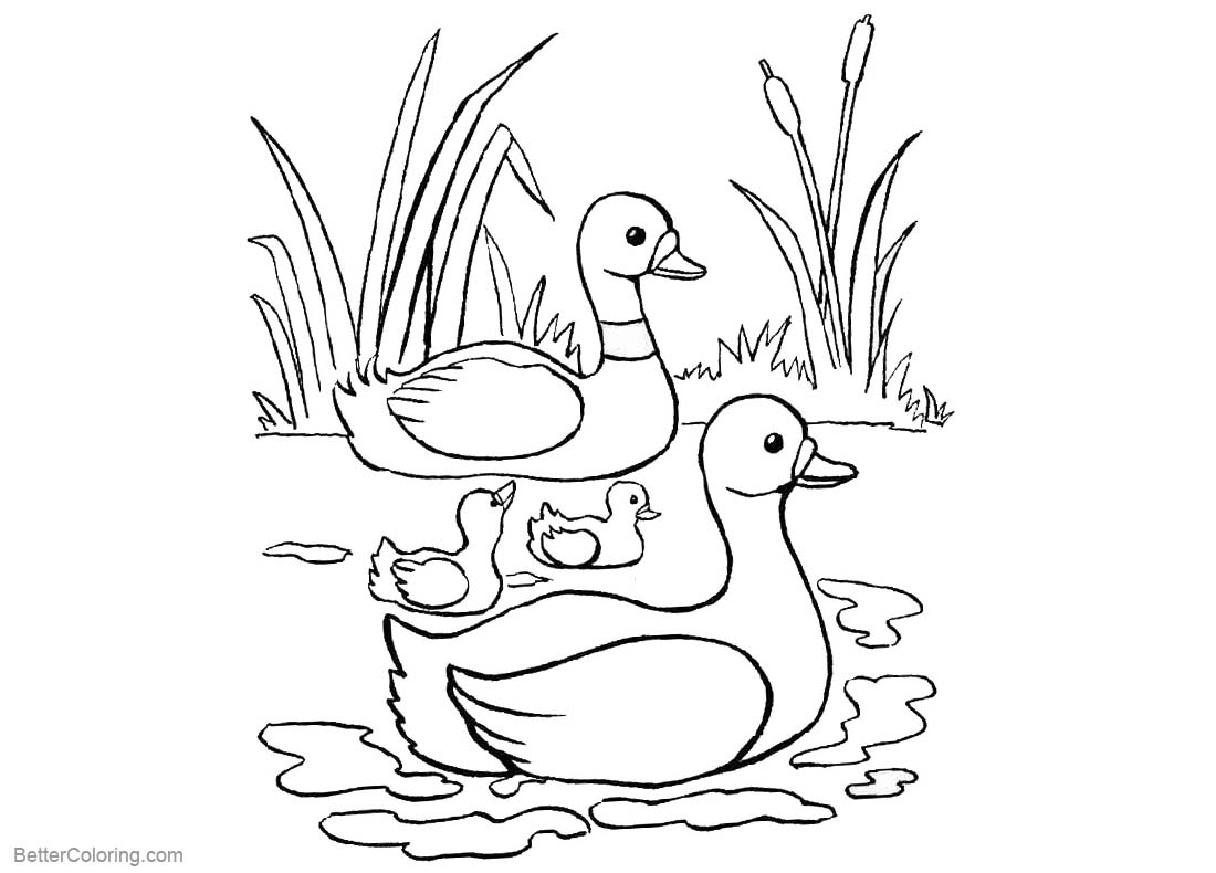 pond coloring pages pond coloring pages ducks and cattails free printable coloring pond pages