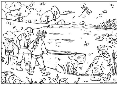 pond coloring pages pond dipping colouring page pages coloring pond