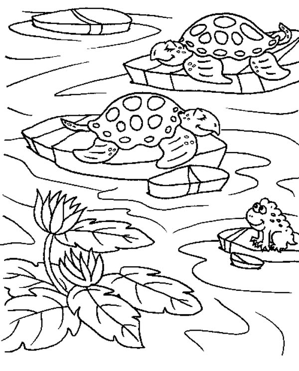 pond coloring pages sea turtle in a ponds with a frog coloring page download coloring pages pond