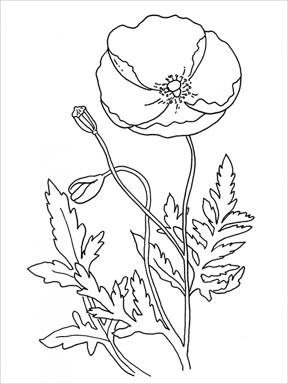 poppy coloring page 18 poppy coloring pages pdf jpg free premium templates page coloring poppy