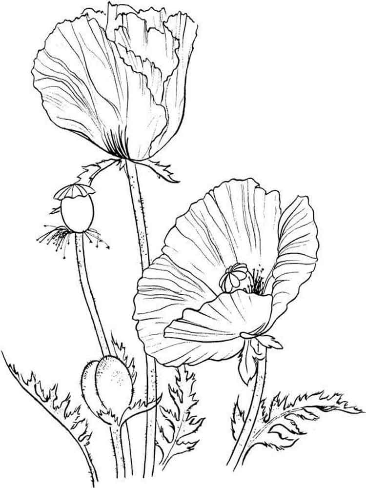 poppy coloring page coloriage les trolls princesse poppy beautiful body poppy page coloring