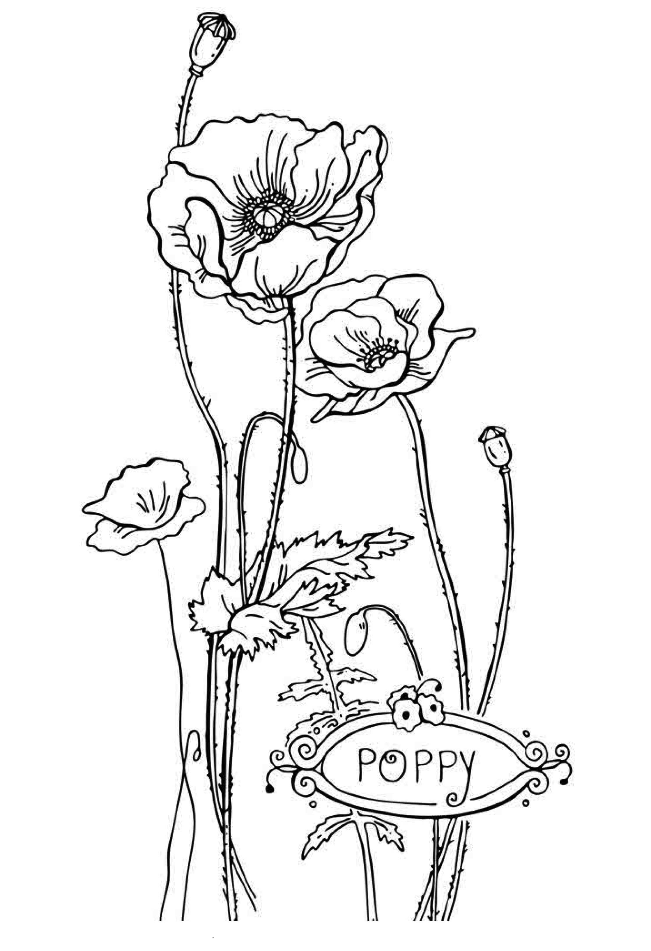 poppy coloring page free poppy coloring page jeffersonclan page poppy coloring