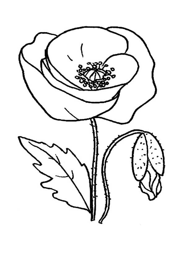 poppy coloring page poppy coloring pages best coloring pages for kids poppy page coloring