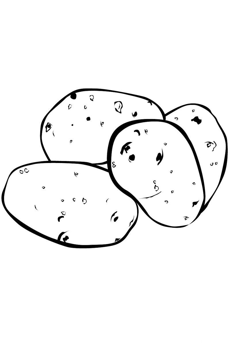 potato to color staple food potato colouring pages picolour potato color to