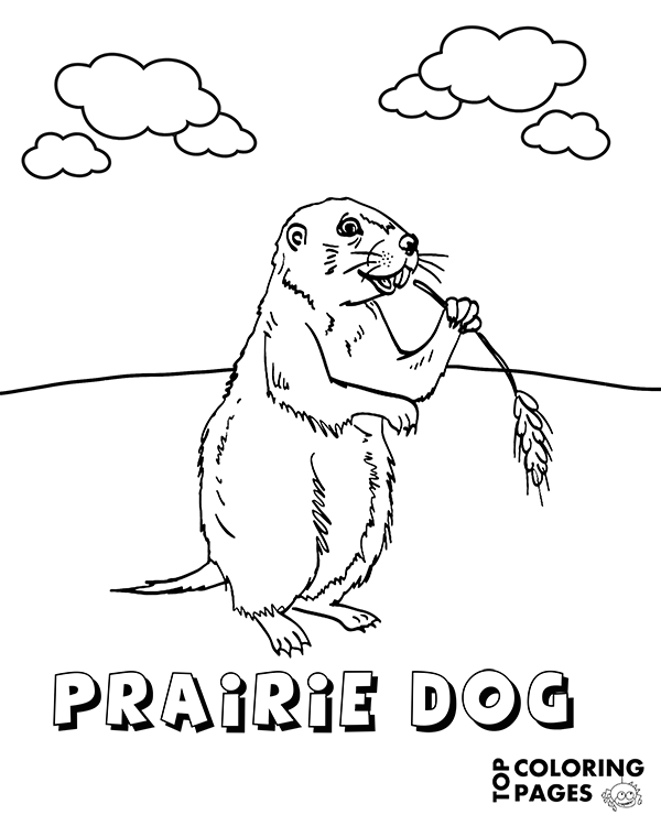 prairie dog pictures to print prairie dog coloring pages kidsuki dog print to pictures prairie