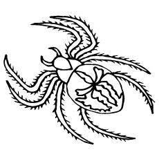 printable black spiders top 10 free printable spider coloring pages online spiders printable black 1 1