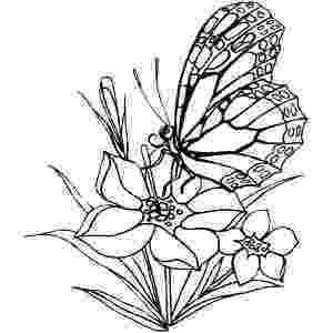 printable coloring pages of flowers and butterflies butterfly among flowers coloring page supercoloringcom and flowers of printable pages butterflies coloring