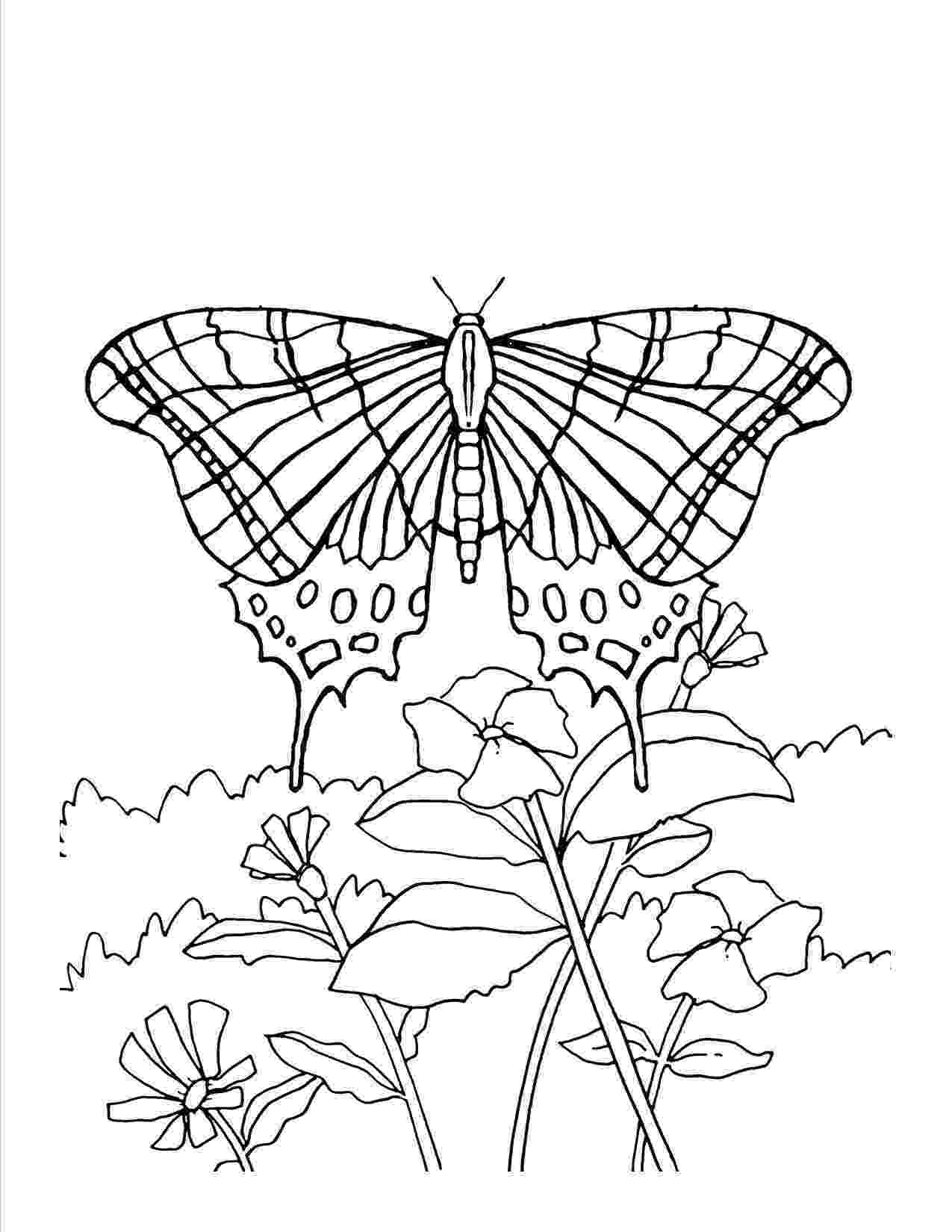printable coloring pages of flowers and butterflies butterfly and flowers coloring page flowers of pages printable coloring butterflies and