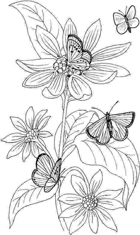 printable coloring pages of flowers and butterflies butterfly coloring page 58 and flowers coloring printable of butterflies pages
