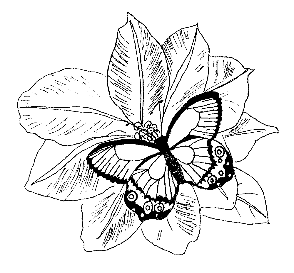 printable coloring pages of flowers and butterflies butterfly flower coloring page wecoloringpagecom pages printable flowers of coloring and butterflies
