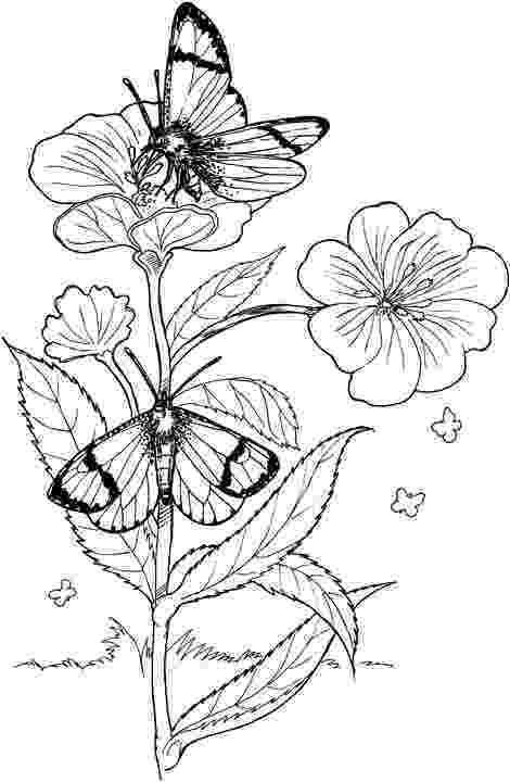 printable coloring pages of flowers and butterflies butterfly with flowers coloring pages butterfly and flowers pages of printable coloring butterflies and