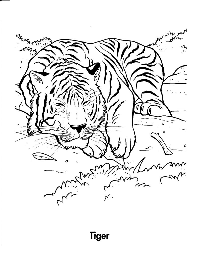 printable pictures of tigers free printable tiger coloring pages for kids printable of pictures tigers