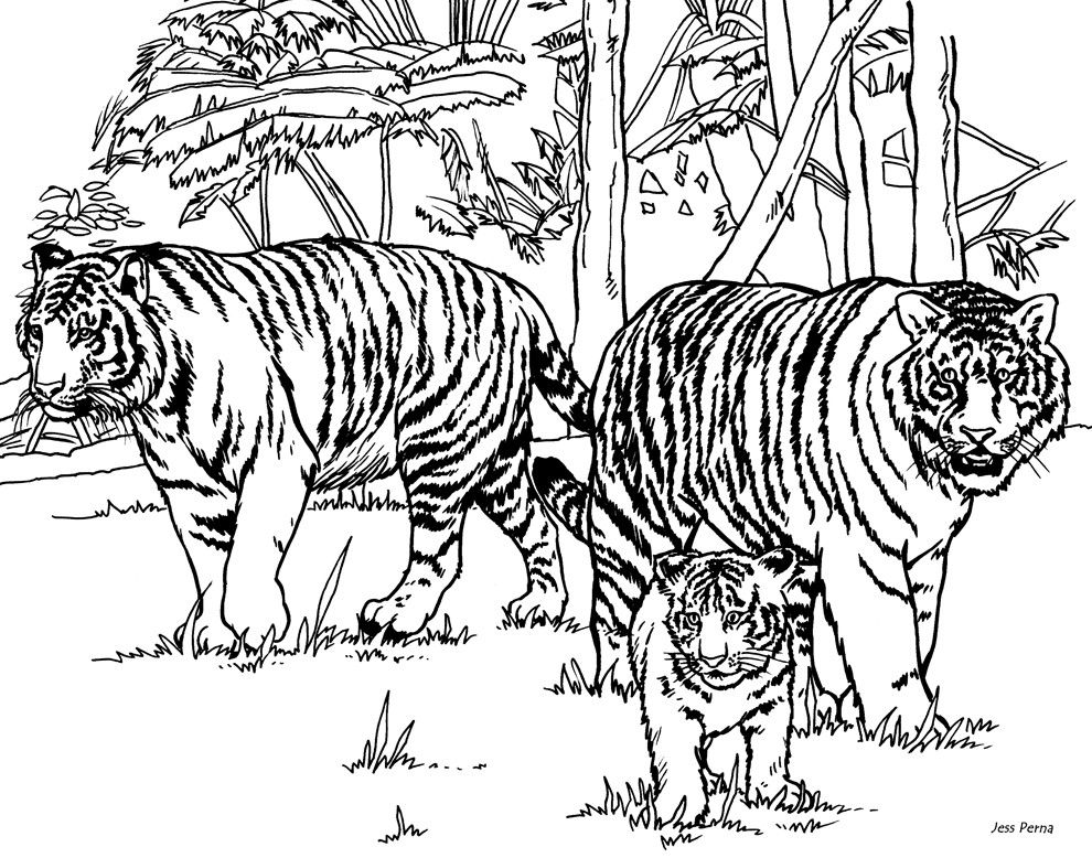 printable pictures of tigers intricate cat coloring pages for adults tiger coloring printable of pictures tigers
