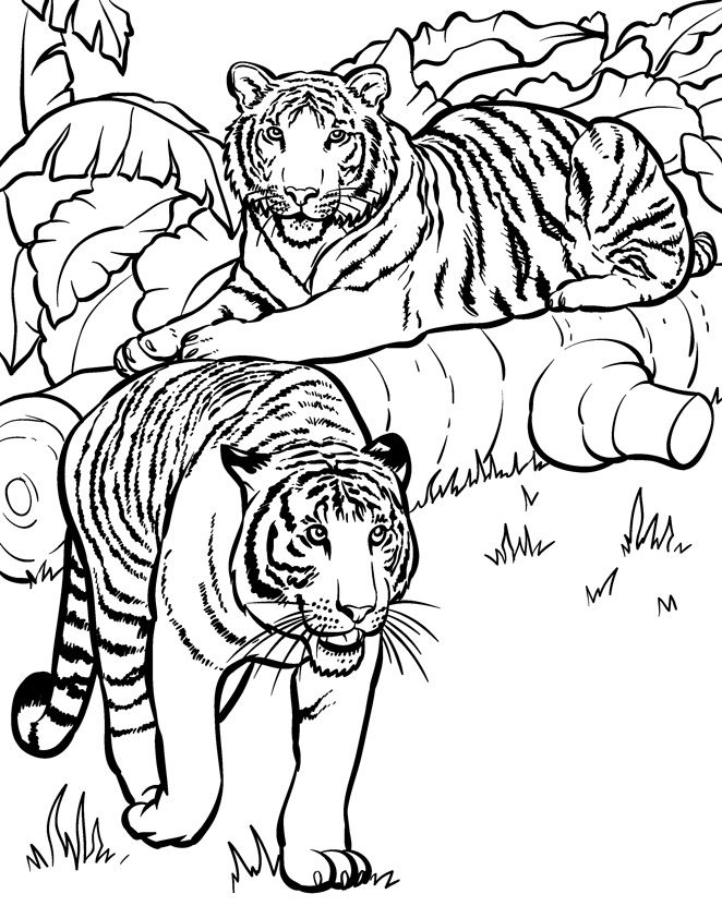 printable pictures of tigers tiger coloring pages for kids printable pictures printable tigers of