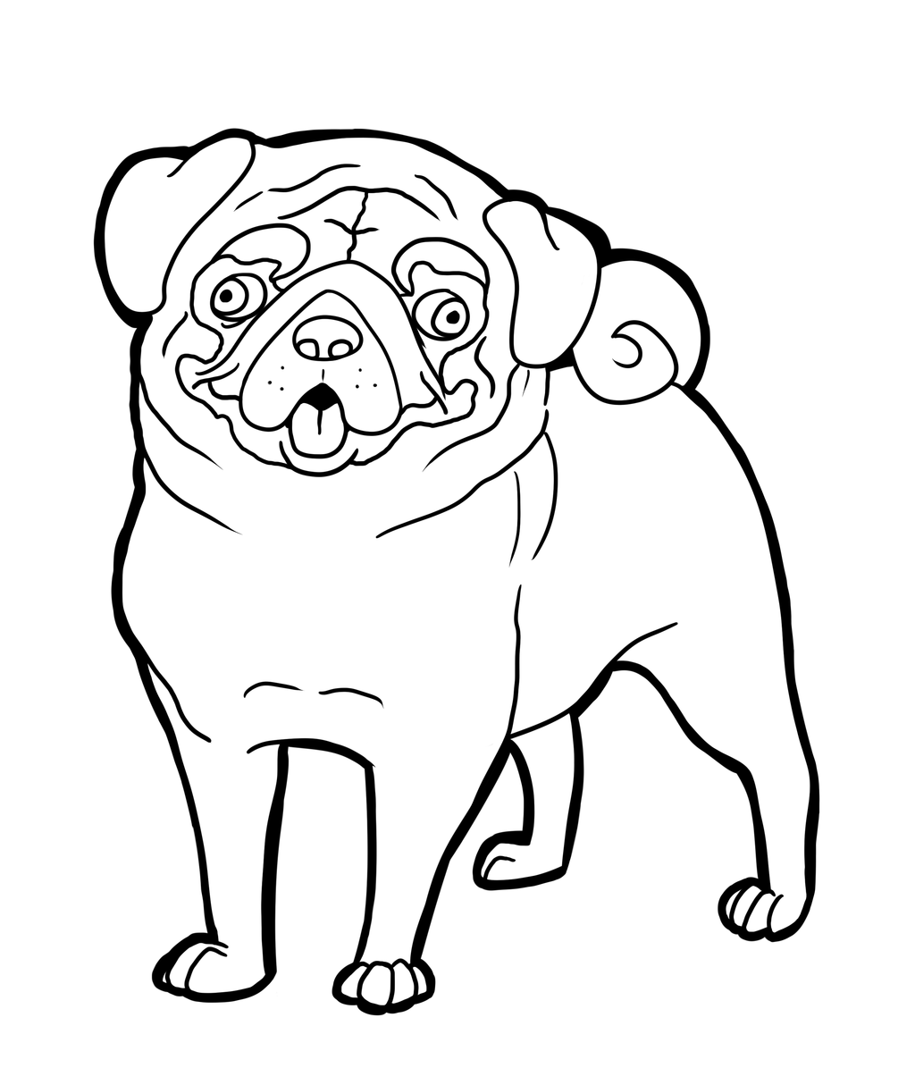 pug coloring pages cute pug dog coloring page free printable coloring pages coloring pages pug