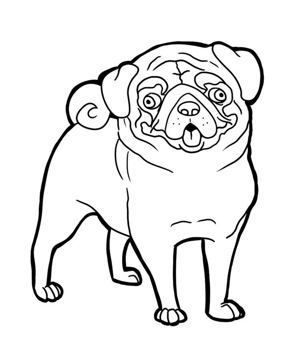 pug coloring pages pug coloring pages pug coloring pages