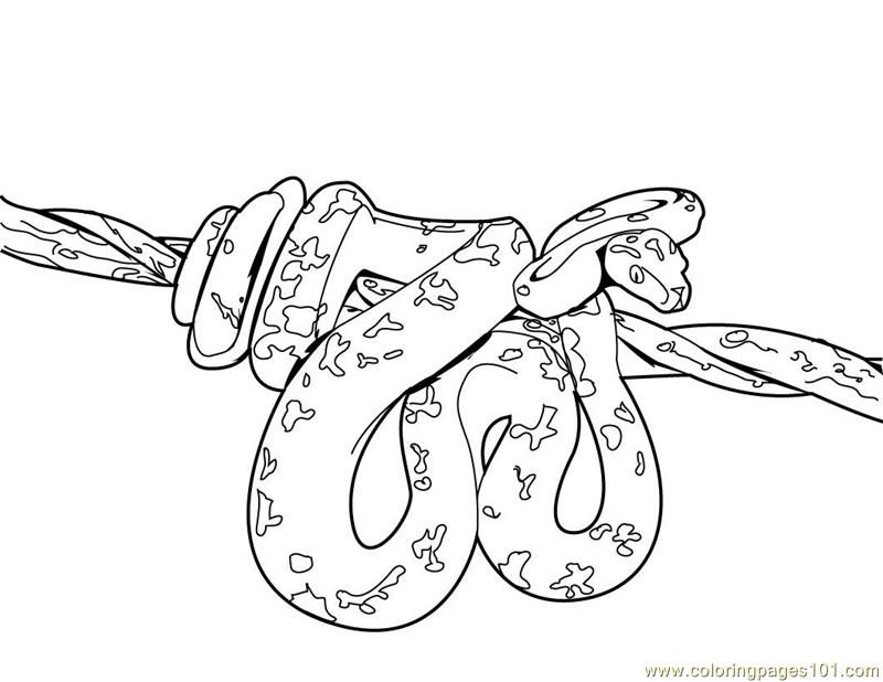 python pictures to color orange ghost ball python coloring page free printable color to python pictures
