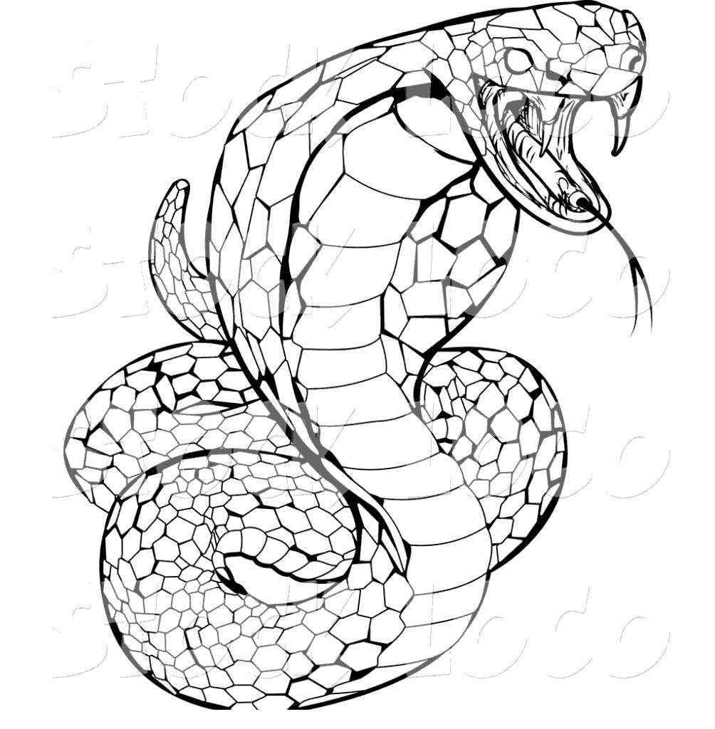 python pictures to color python coloring pages download and print for free color python to pictures