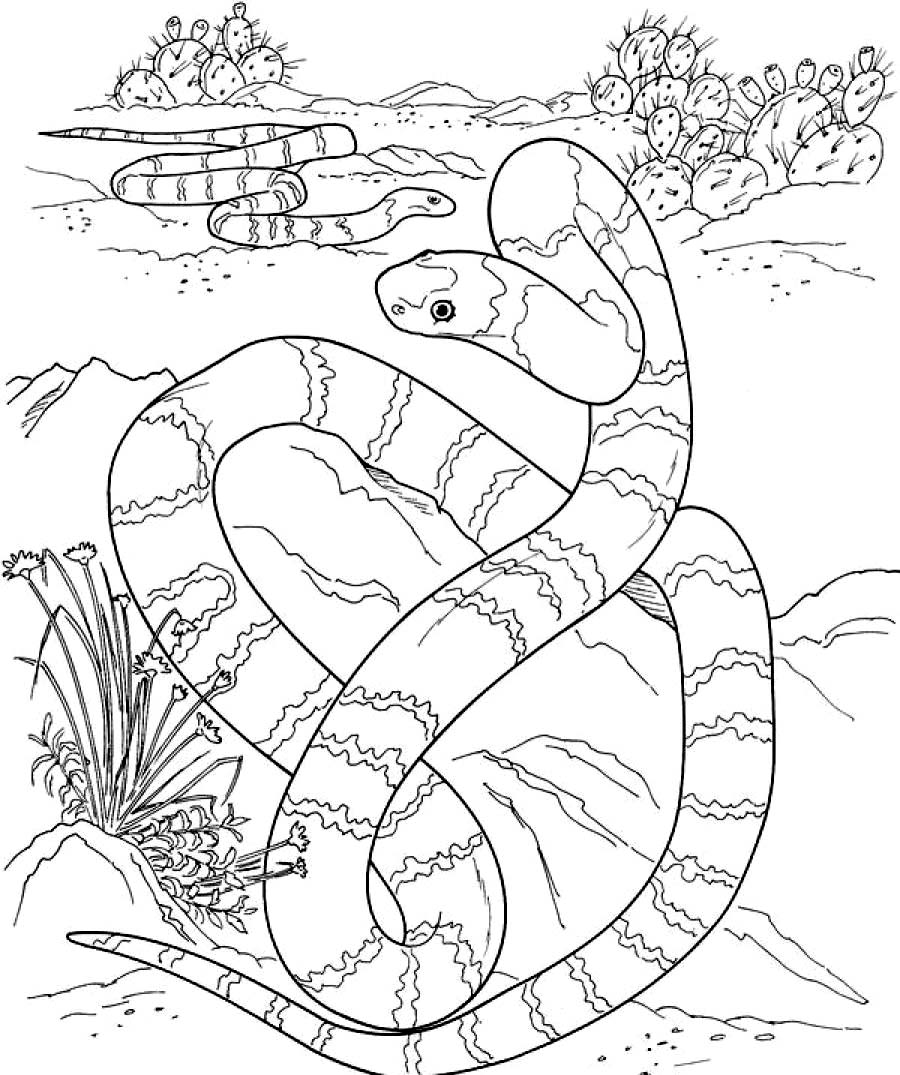 python pictures to color rattlesnakes coloring pages download and print for free pictures color python to