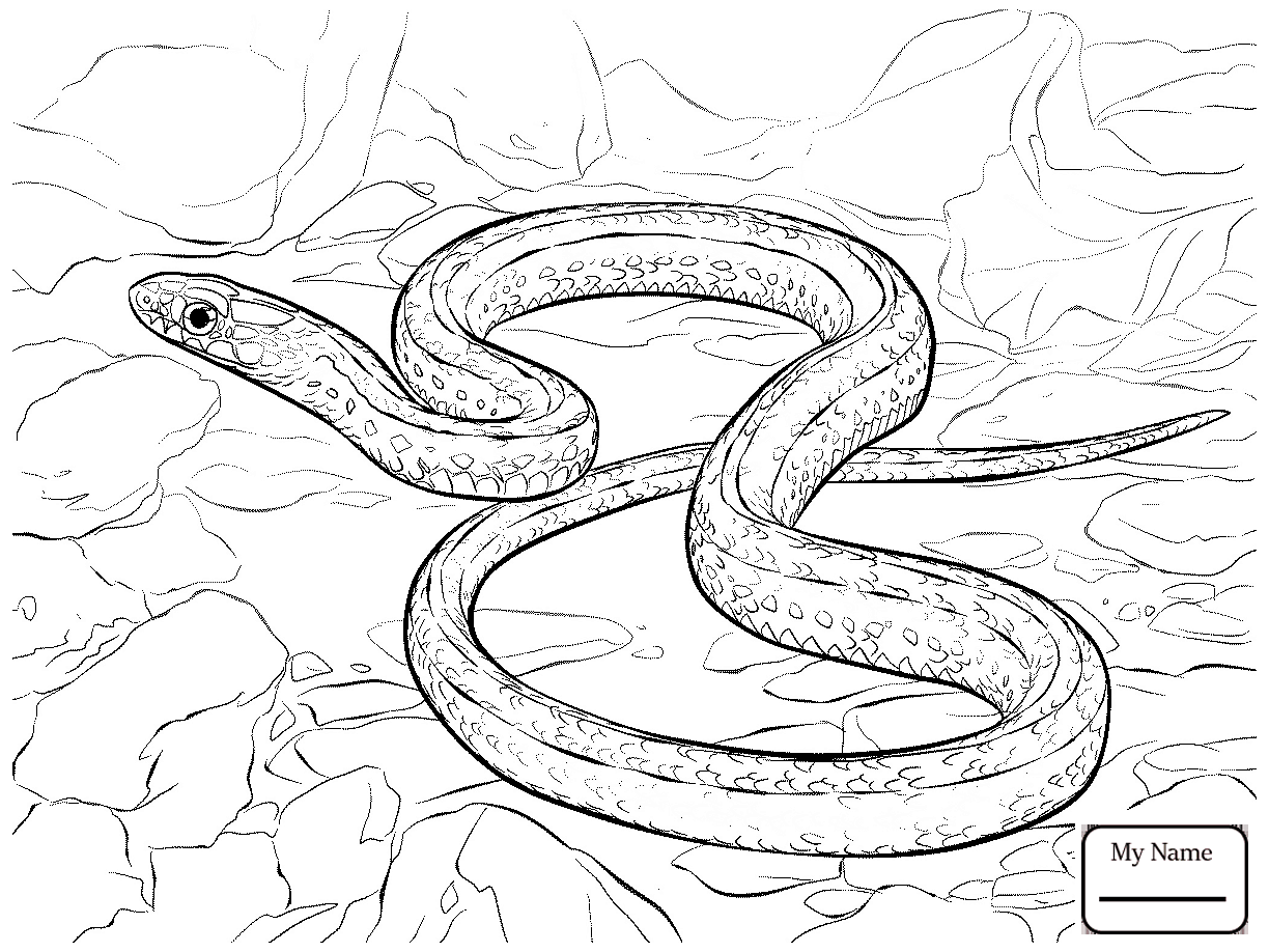 python pictures to color snake coloring pages hellokidscom pictures python color to