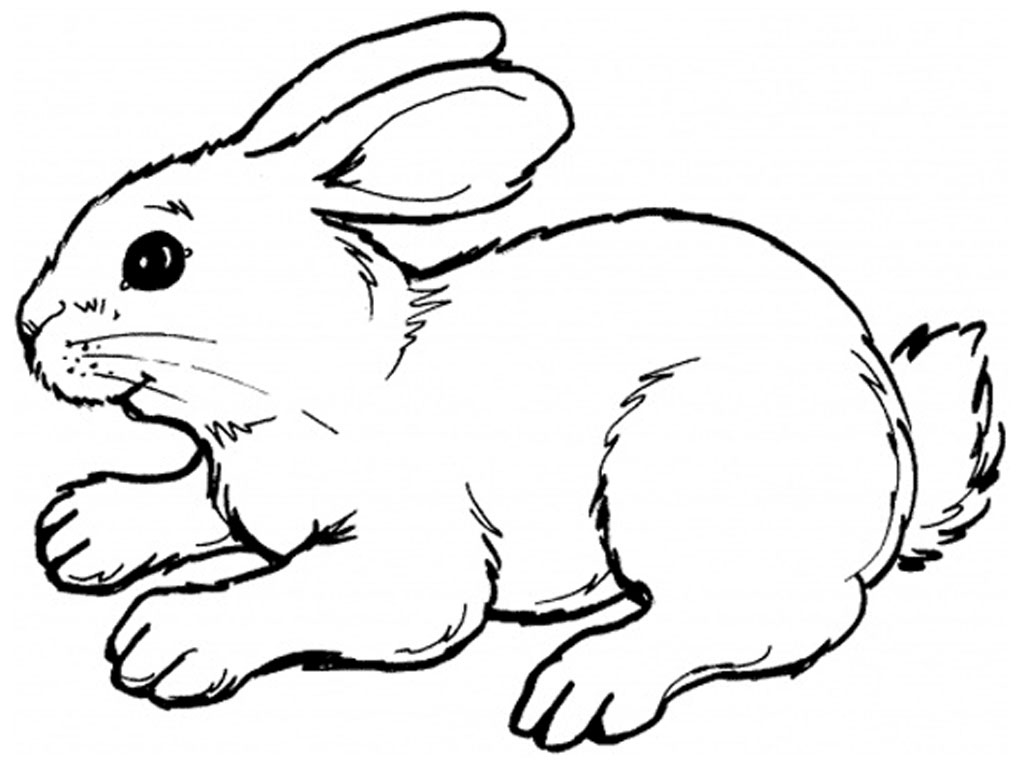 rabbit color page free printable rabbit coloring pages for kids rabbit page color