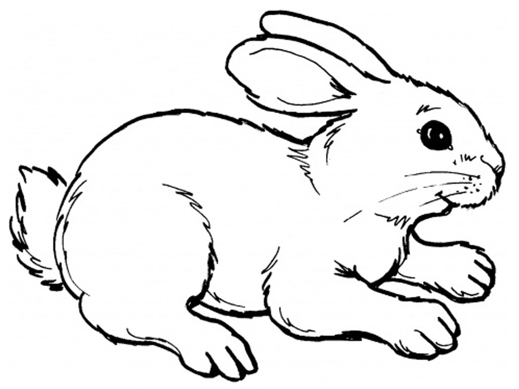 rabbit color page free printable rabbit coloring pages for kids rabbit page color 1 1